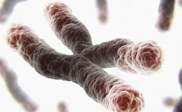Telomeres Analysis