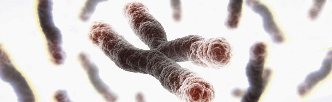 telomere testing iator