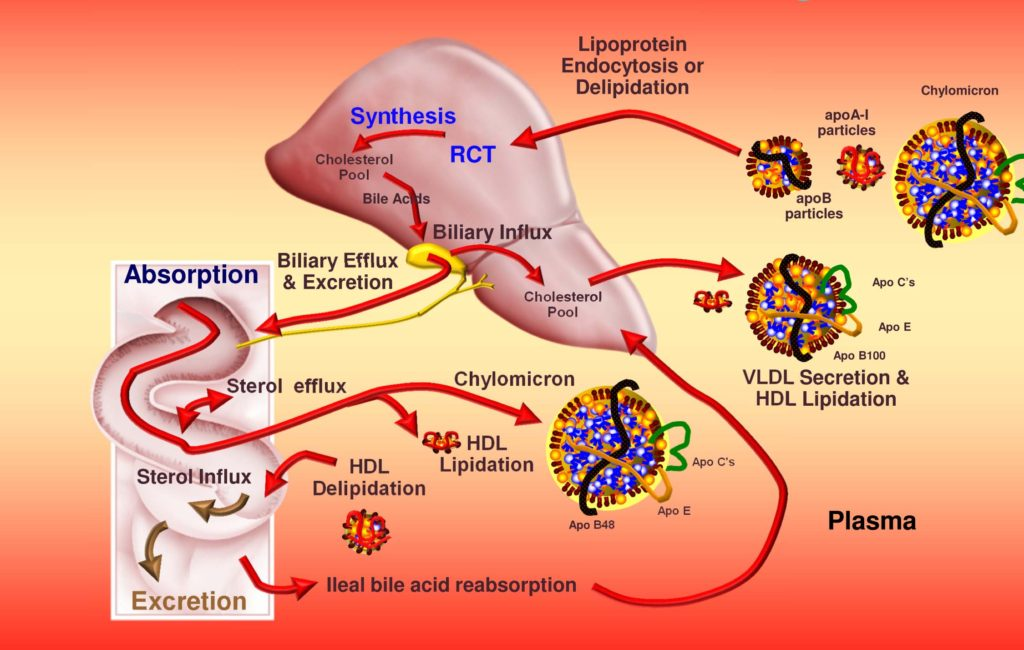 Χοληστερίνη (Χοληστερόλη) ηπατική σύνθεση - Συμπτώματα