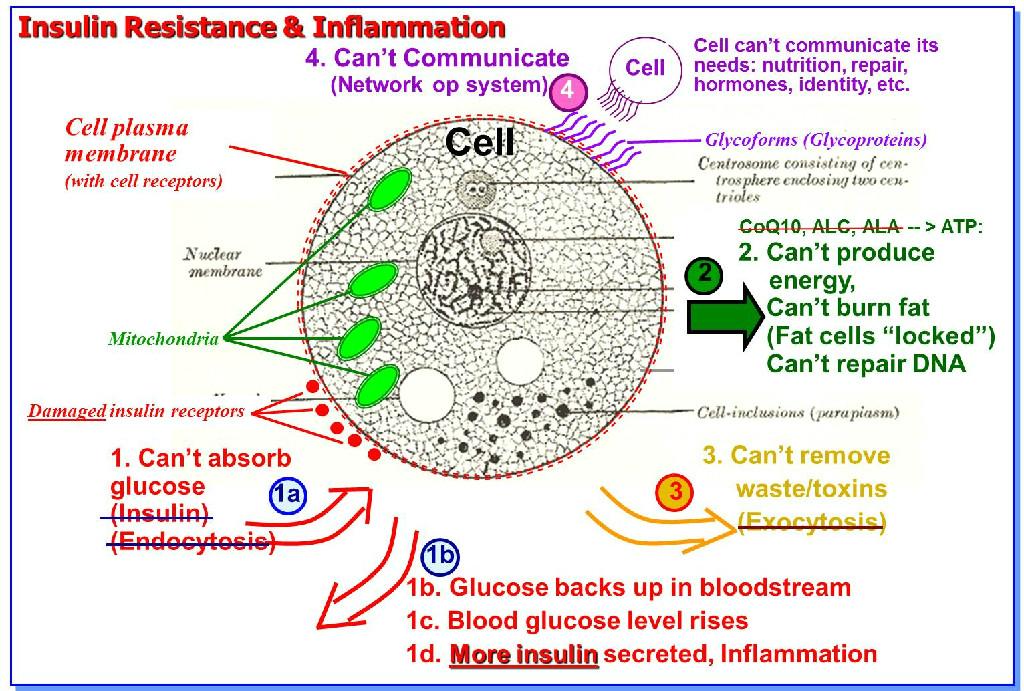 Σακχαρώδης Διαβήτης και παθοφυσιολογία - diabetes-pathophysiology