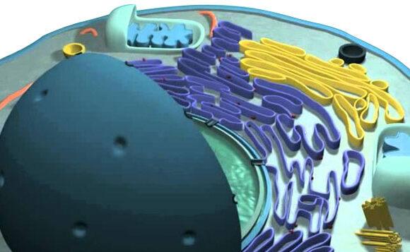 Molecular Metabolic Profile