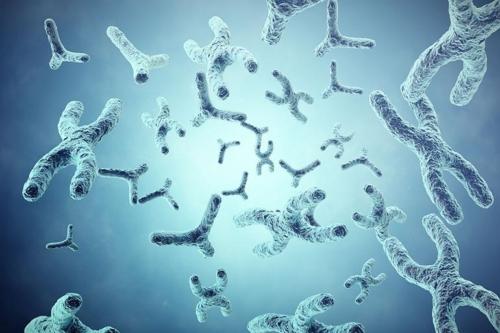 Η συσχέτιση των Τελομερών με την επιτάχυνση της κυτταρικής γήρανσης